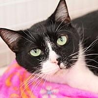 Adopt A Pet :: Billye - Pacific Grove, CA