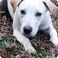 Adopt A Pet :: Blondie - Woodstock, GA