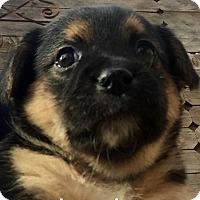 Adopt A Pet :: Jasmine - Wichita Falls, TX
