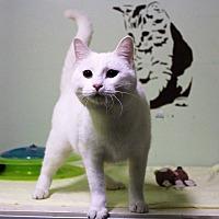 Adopt A Pet :: Lilith - Murphysboro, IL