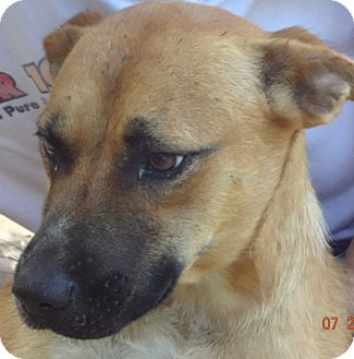 Shepherd (Unknown Type) Mix Dog for adoption in Centerville, Tennessee - Jose'