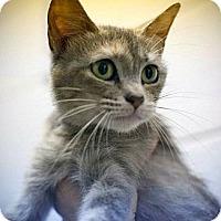 Adopt A Pet :: Kelly & Alley - Chesapeake, VA