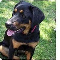 Adopt A Pet :: Veda - Scottsdale, AZ