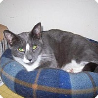 Adopt A Pet :: Tami - Kelso/Longview, WA