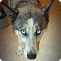 Adopt A Pet :: Sky - Ashland, OR