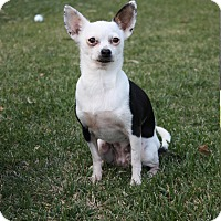Adopt A Pet :: Lily - Winters, CA