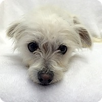 Adopt A Pet :: Meekus - Mission Viejo, CA