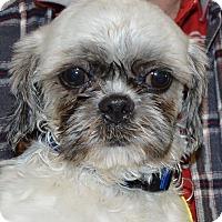 Adopt A Pet :: Garth - Prole, IA