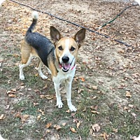 Terrier (Unknown Type, Medium) Mix Dog for adoption in Hohenwald, Tennessee - Quilly