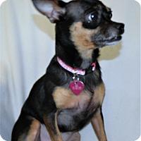 Adopt A Pet :: Roxie - Umatilla, FL