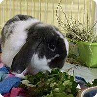 Adopt A Pet :: Herbie - Moneta, VA