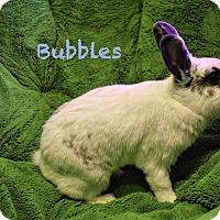 Adopt A Pet :: Bubbles - Elizabethtown, KY