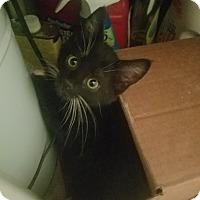 Adopt A Pet :: Picasso - Ogden, UT