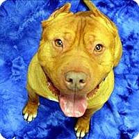 Adopt A Pet :: Wee Man - Portland, OR