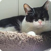 Adopt A Pet :: Toots - Richboro, PA