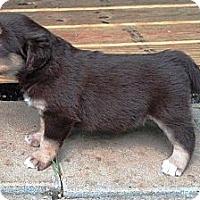 Adopt A Pet :: Julia - Brooklyn, NY