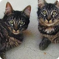 Adopt A Pet :: Dakota - Brea, CA