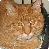 Adopt A Pet :: Parker - Plainville, MA