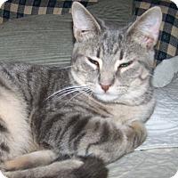 Adopt A Pet :: Granita - St. Louis, MO