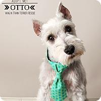 Adopt A Pet :: Otto-Pending Adoption - Omaha, NE