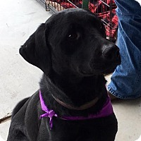 Adopt A Pet :: Smokey - Huntsville, AL