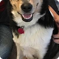 Adopt A Pet :: Mikey - Crocker, MO
