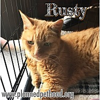 Adopt A Pet :: Rusty - Toledo, OH