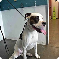 Adopt A Pet :: ID#A1684372 is at  East Valley - Beverly Hills, CA