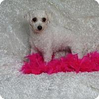 Adopt A Pet :: Molly - Sioux Falls, SD