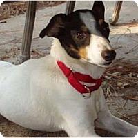 Adopt A Pet :: Mickey in Houston - Houston, TX