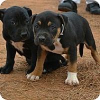 Adopt A Pet :: Tad and Tab - Athens, GA