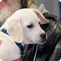 Adopt A Pet :: Sasha - Homewood, AL