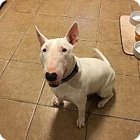 Adopt A Pet :: Millie - Houston, TX