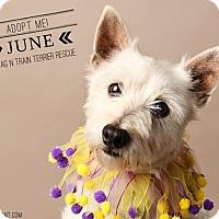 Adopt A Pet :: June - Omaha, NE