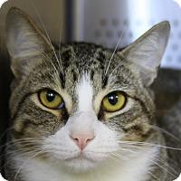 Adopt A Pet :: Beldar - Sarasota, FL