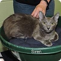 Adopt A Pet :: Siren - Slidell, LA