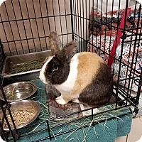 Adopt A Pet :: Phoenix - Westminster, CA