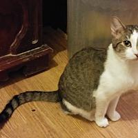 Adopt A Pet :: Ives - Farmington, AR