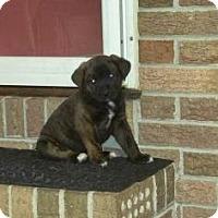Adopt A Pet :: James - Columbia, SC