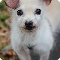 Adopt A Pet :: Cameron - Ft. Lauderdale, FL