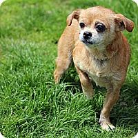 Adopt A Pet :: Pumpkin - Tinton Falls, NJ