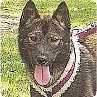 Adopt A Pet :: Iri - Southern California, CA