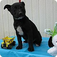 Adopt A Pet :: Picasso - Humboldt, TN