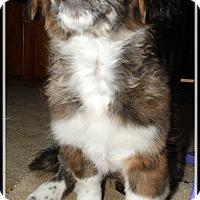 Adopt A Pet :: Tiffany - Cincinnati, OH