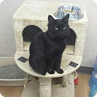 Adopt A Pet :: Hilary - Germantown, OH