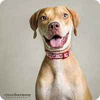 Adopt A Pet :: Sassy - Chandler, AZ