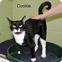 Adopt A Pet :: Cookie - Slidell, LA