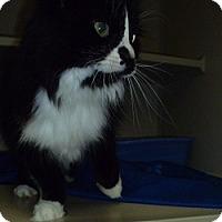 Adopt A Pet :: Paige - Hamburg, NY