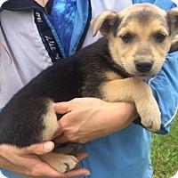 Adopt A Pet :: Riley (6 lb) Video - Burlington, VT