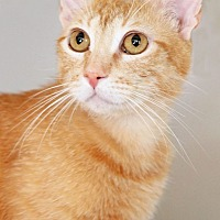 Adopt A Pet :: Isabella - Encinitas, CA
